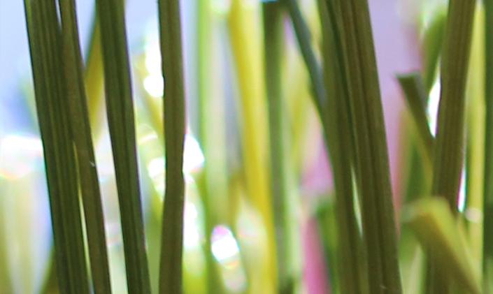 Artificial Grass Fake Grass Lawn