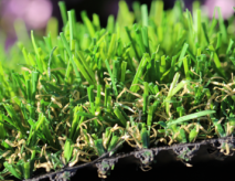 Most Natural Artificial Turf
