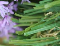 Yard Artificial Grass